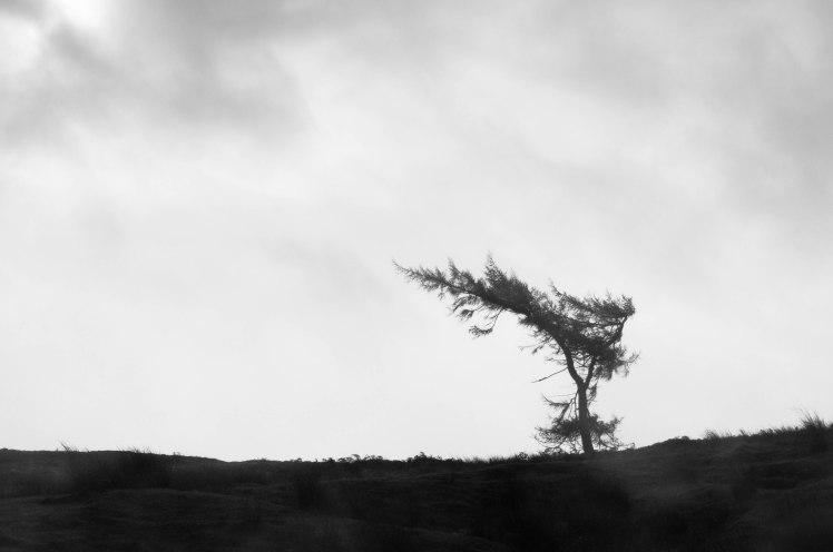 Tree on Agra Moor